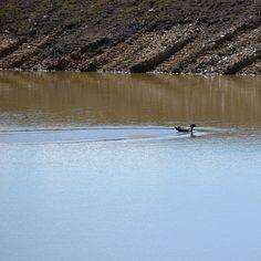 #dam #duck #morningwalk