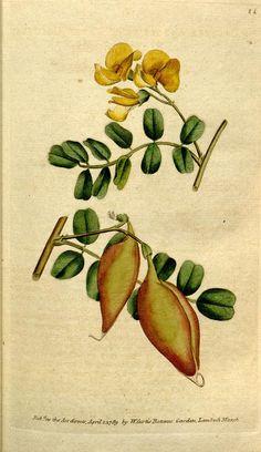 v.3-4 (1790-1791) - The Botanical magazine, or, Flower-garden displayed ... / - Biodiversity Heritage Library