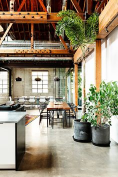 Greenery adds color and life to an industrial space, serving as the perfect accent to concrete floors and wooden beams. The height of the tree draws the eye upward to showcase the architectural lines of the lofted ceilings.
