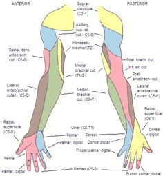 cervical spinal stenosis and pain down arms/hands. ~ I think that this might be for massage therapists, but it might be helpful for a nurse too! :)