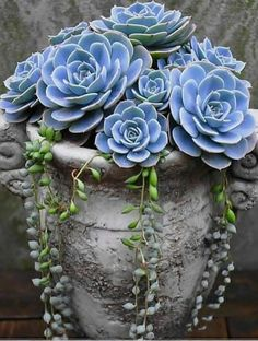 Charming Succulent Indoor Garden Ideas 2019 – Page 60 of 64 succulent garden indoor; Succulent Landscaping, Succulent Gardening, Succulent Pots, Planting Succulents, Container Gardening, Planting Flowers, Watering Succulents, Organic Gardening, Succulent Garden Ideas