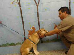 www.PetHarbor.com pet:SBCT.A501552