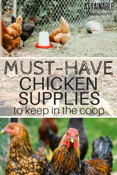 This is the chicken gear and chicken equipment you'll be happy to have in your coop at the moment when you need it. Must-have chicken supplies for the homestead, if you will. Chicken Coop Kit, Mobile Chicken Coop, Portable Chicken Coop, Best Chicken Coop, Backyard Chicken Coops, Building A Chicken Coop, Chicken Runs, Chickens Backyard, City Chicken