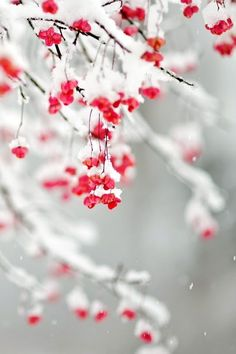 """Search Results for """"winter flower wallpaper iphone – Adorable Wallpapers Iphone 6 Wallpaper, Trendy Wallpaper, Flower Wallpaper, Cute Wallpapers, Wallpaper Backgrounds, Winter Wallpapers, Winter Backgrounds, Desktop Wallpapers, Winter Screensavers"""