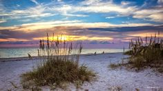 Honeymoon Island Florida. I loved this  place. It is out of the way of the toursity spots and simply GORGEOUS.