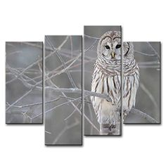 4 Piece Wall Art Painting White Owl In The Tree Prints On Canvas The Picture Animal Pictures Oil For Home Modern Decoration Print Decor * Continue to the product at the image link. (This is an affiliate link) Canvas Pictures, Pictures To Paint, Print Pictures, Animal Pictures, Owl Canvas, Canvas Wall Art, Wall Art Prints, Poster Prints, Canvas Prints