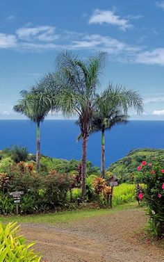 Based on the signs and the view, I'm pretty sure this is the Maui Garden of Eden, the perfect place to stop on the way to Hana. http://www.mauigardenofeden.com/  #Hawaii