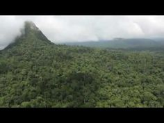 ▶ CEDIA: Saving the Peruvian Amazon - YouTube