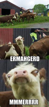 "Oh my gosh I just busted up laughing. And you know you are going to say ""Mmmmerrr"" next time you see a cow."