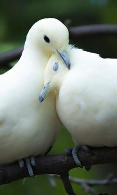 22 Pictures of a Happy Valentines Veterinary Zoo - meowlogy Cute Birds, Pretty Birds, Beautiful Birds, Animals Beautiful, Nature Animals, Animals And Pets, Cute Animals, Dove Pictures, Dove Images