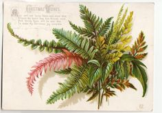"Victorian 1883 Xmas Card Embossed Ferns by Marian Chase pub'd by S. Hildesheimer FOR SALE • £1.50 • See Photos! Money Back Guarantee. Victorian Embossed Christmas Card (15 x 10.7) cm showing ferns by artist MC. Seddon in ""A Gallery of Greetings"" Volume 101 attributes this to Marian Chase and dates it to 381731898668"