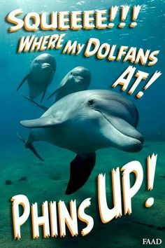 Phins up for sure! Indianapolis Colts, Cincinnati Reds, Pittsburgh Steelers, Dallas Cowboys, Miami Dolphins Funny, Pro Football Teams, Football Season, Dolphins Cheerleaders, Nfl Logo