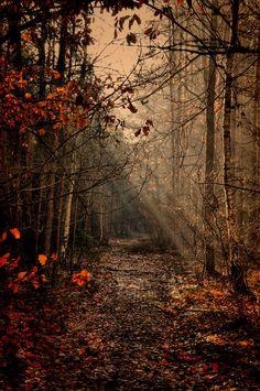 Beautiful Nature, love the way light can make a scene.