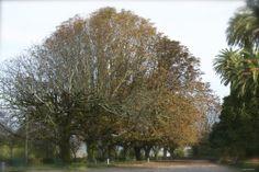 fall, leaves, autumn, beautiful moment