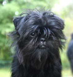 With only one opportunity to read these content rich article... DogSiteWorld-Store - http://DogSiteWorld.com/