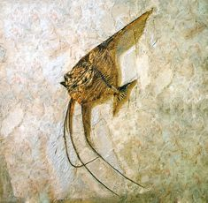 Fossil Fish ~another example of RAPID fossilization - not over millions of years - soft tissue would have ROTTED before it could fossilize.