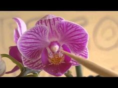▶ Cultivando orquídeas - Parte 1: Introducción - YouTube