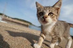 Кошачий рай на острове Кюсю, Япония… (37 фото)