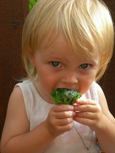 """Buenos consejos sobre cuales son los alimentos para un cerebro sano!! Llenémosles las """"loncheras"""" con """"Súper"""" alimentos!!"""