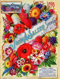 1898 Salzer Paradise Vintage Flowers Seed Packet Catalogue Advertisement Poster…