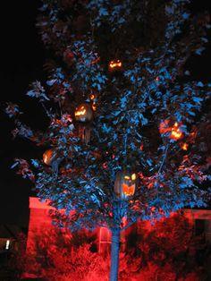 Halloween Pumpkin Tree   Name: brees86-albums-halloween-2010-picture77157-pumpkin-tree.jpgViews ...