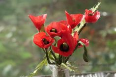 Make Common (Corn or Remembrance)  Poppies in Dollhouse Scale: Make Miniature Field /Corn/Remembrance Poppies