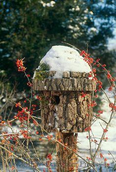. log wood bird house, rustic