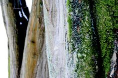 Tree in winter. Winter Trees, Photographs, Fotografie