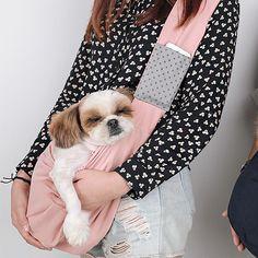 쉐르쁘띠 Getting A Puppy, Puppies, Cubs, Pup, Newborn Puppies, Puppys, Doggies, Teacup Puppies