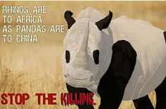 Rhinos are to Africa what Panda are to China! Boycott products from Rhino murdering countries! Snake Breeds, Rhino Poaching, Rhino Art, Save The Rhino, Panda Art, The Last Unicorn, Stop Animal Cruelty, Animal Protection, Rhinos