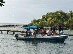 Tourists watching dolphins at Anthony's Key Resort in Roatan Bay Islands, Honduras