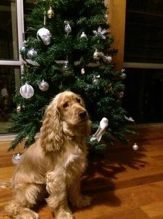 I ruv Christmas