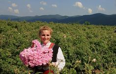 The Rose Festival in Kazanlak (Празник на Розата в Казанлък). Bulgaria produces approximately 70% of the world's rose oil. The annual festival in Kazanlak, which is in the heart of Bulgarian rose country, celebrates all things related to roses.
