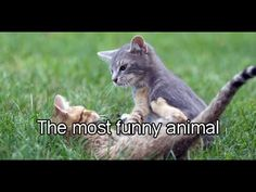 Funny Cats Videos Funny Animal Funny Cat Funny Animals Compilation  #Funny Animals - http://positivelifemagazine.com/funny-cats-videos-funny-animal-funny-cat-funny-animals-compilation-funny-animals/ http://img.youtube.com/vi/lz6aMQVuEQg/0.jpg  funny cats and dogs,funny cats compilation,funny cats video,funny cats and dogs try not to laugh or grin,funny cats fails,funny cats compilation cat videos january … Judy Diet Programme ***Start your own website with USD3.9 per