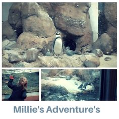 We visited the Oregon Zoo, Millie especially loved the penguins!