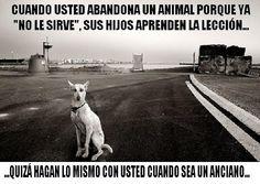 Conciencia Animal