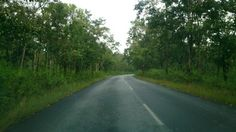 Road through the jungles are really awesome.