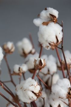 Cotton and nature Flower Phone Wallpaper, Summer Wallpaper, Wallpaper For Your Phone, Nature Wallpaper, Wallpaper Backgrounds, Aesthetic Iphone Wallpaper, Aesthetic Wallpapers, Cotton Plant, Flower Aesthetic