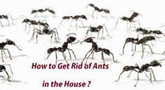 How to Kill Roaches Fast? Natural Spice, Natural Herbs, Ant Removal, German Cockroach, Get Rid Of Ants, Types Of Herbs, Small Insects, What To Use, How To Get Rid