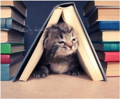 I love a cat who loves books as much as I do:)