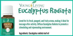 Eucalyptus Radiata essential oil is useful for massage after activity, and can be diffused for a stimulating and rejuvenating environment. This oil has a mildly pungent, sweet, and fruity aroma and includes the naturally occurring constituents 1, 8 cineole and eucalyptus. #Promo #maypvpromo #eucalyptusradiata #essentialoils #youngliving #yleo