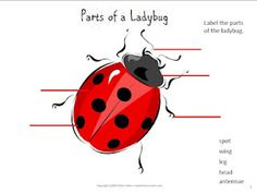{Free Printable} Parts of a ladybug labeling activity at http://sweetteaclassroom.com #edchat
