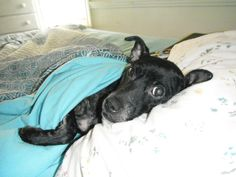 My dog Roxie chillin in the bed! Roxy, Just Love, Bed, Stream Bed, Beds, Bedding