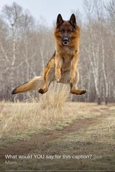 Have your pet jumping for joy after a check-up with Crestway Animal Clinic! http://www.crestway-animal-clinic.com/