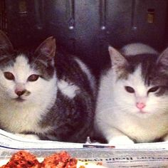 Feral kittens that I rescued. Feral Kittens, Cats, Make You Smile, Make It Yourself, Animals, Beautiful, Gatos, Animales, Animaux