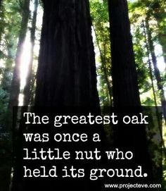 The greatest oak was once a little nut who held its ground