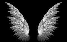 Angel Wings wallpaper by _Savanna_ Angel Wings Art, White Angel Wings, Photo Background Images, Photo Backgrounds, Angel Wings Pictures, Wings Wallpaper, Polaroid Template, Spiritual Cleansing, Ange Demon