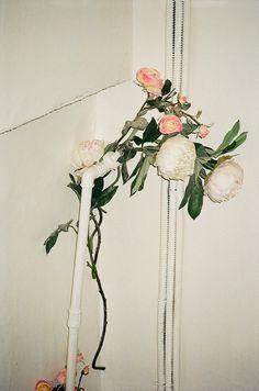 wolfgang_tillmans_flower_pipe.jpeg (464×700)