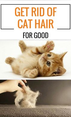 Get Rid Of Cat Hair For Good