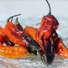 Chili Rouge Noir (Schärfe 10) (Pflanze)  Capsicum chinense Eine weitere, atemberaubend schöne Sorte in der Tradition der italienische Züchter eine Bhut Jolokia - Pimenta da Neyde Kreuzung. Die Schoten sind leuchtend feuerrot, mit großflächigen, schwarzen Schattierungen. Sie sehen so aus, als hätten sie sich durch ihre eigene Schärfe selbst in Brand gesetzt und hängen nun wie glühende Kohlen an der Pflanze.